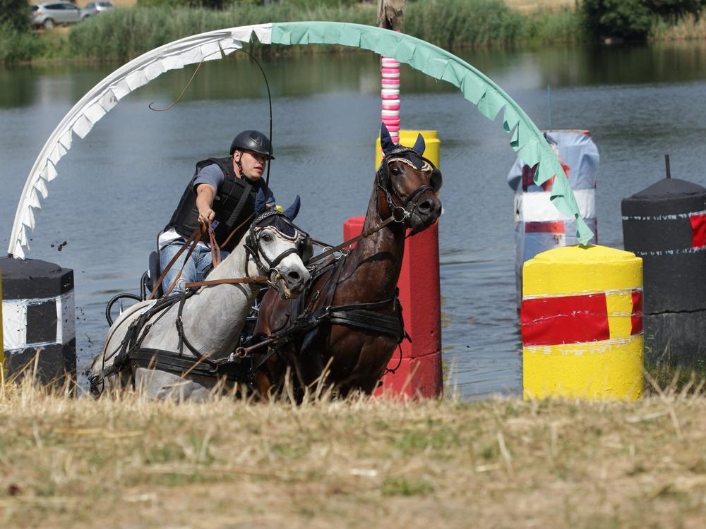 Pferde in Action 2