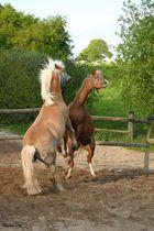 Pferde in Aktion
