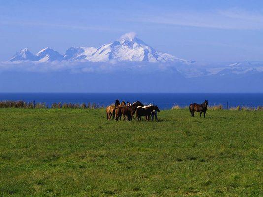 Pferde in Alaska