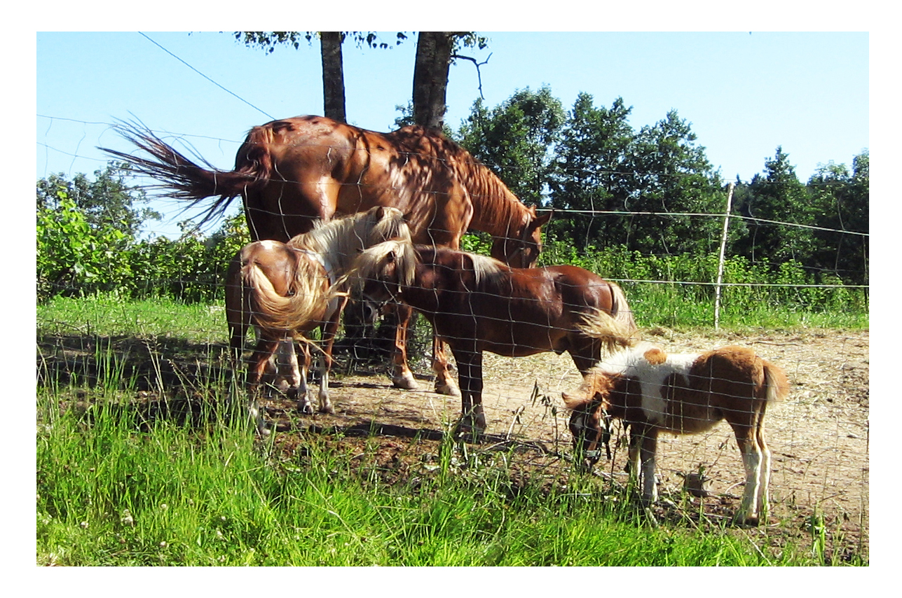 Pferde in allen Größen