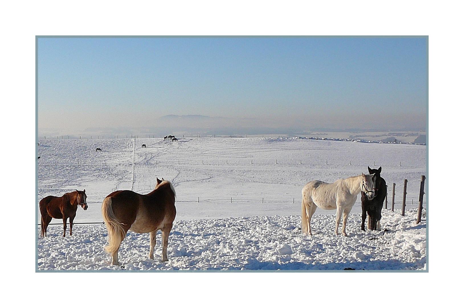 Pferde in der Winterlandschaft..