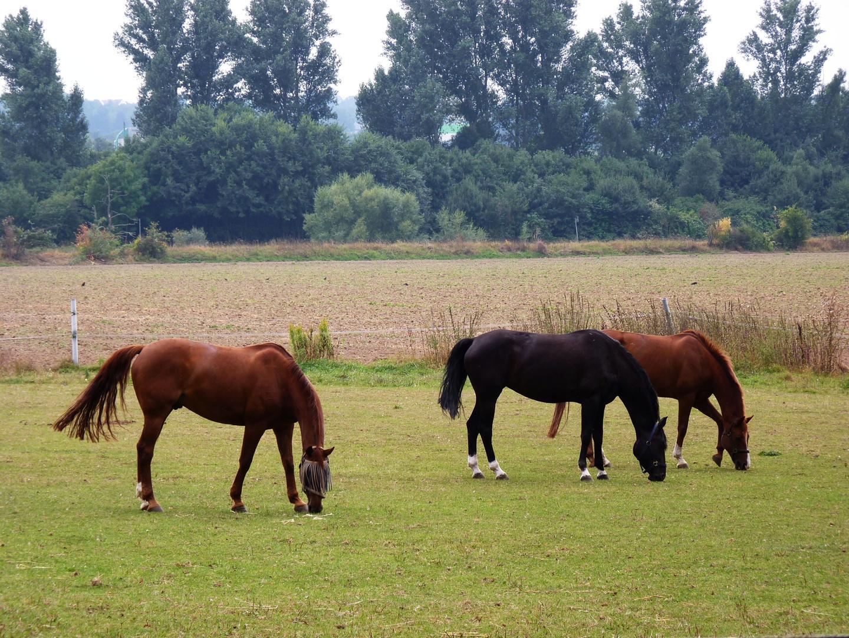 Pferde in freier Natur