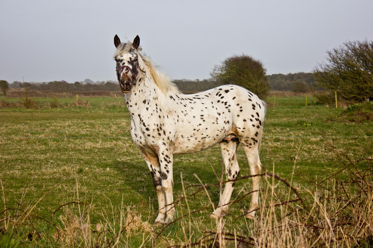 Pferde in Irland