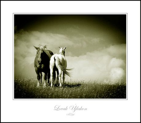 Pferde in Nordungarn