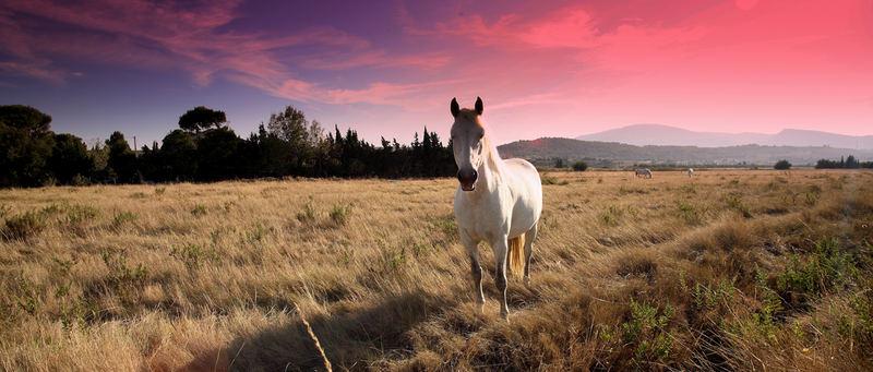 Pferde in Südfrankreich