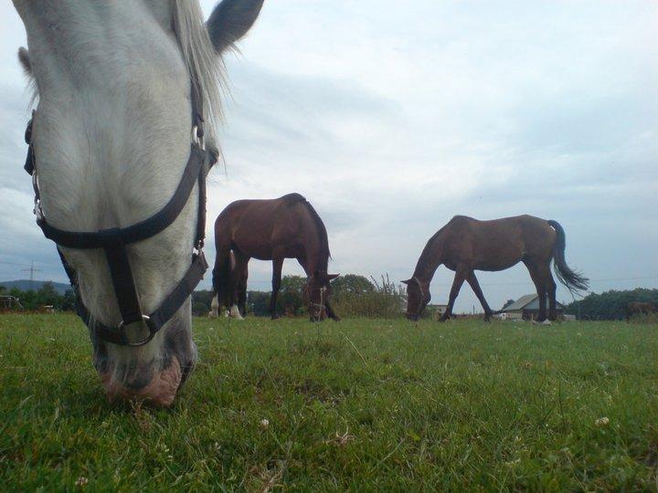Pferde mal anders gesehen 2