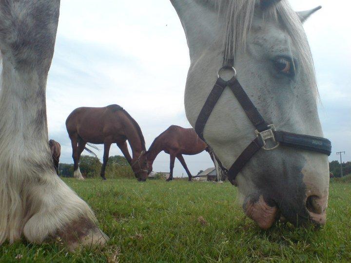 Pferde mal anders gesehen 3