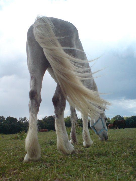 Pferde mal anders gesehen 5