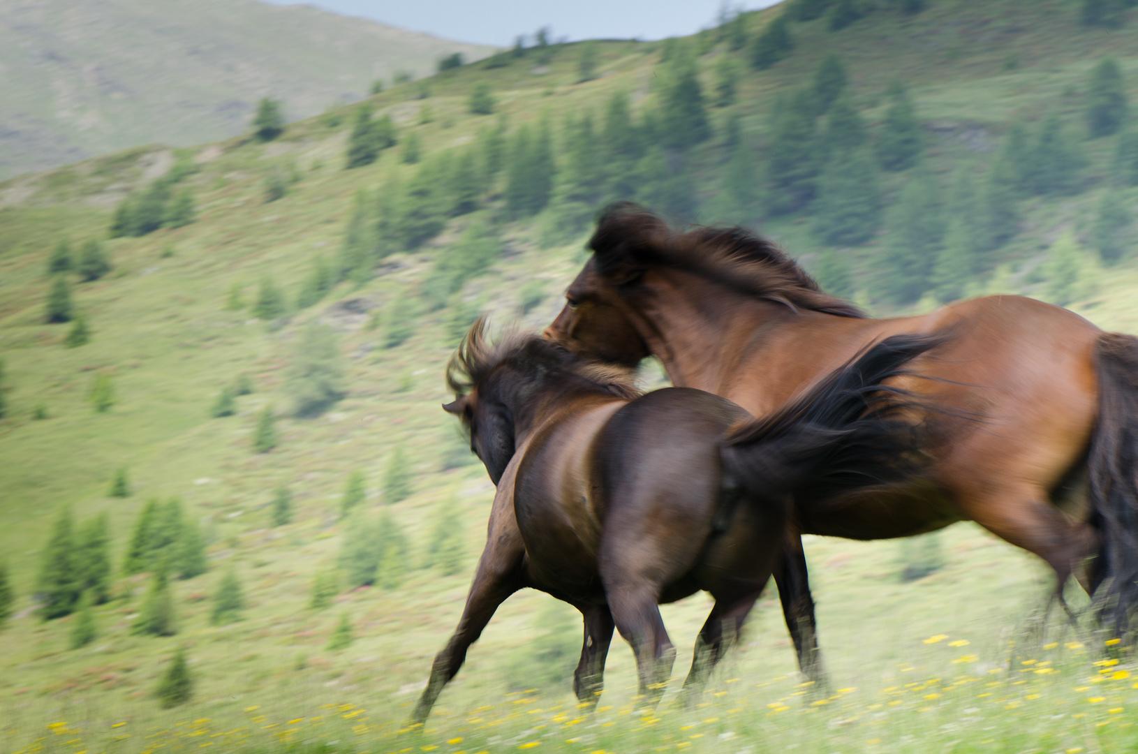 Pferde mit viel Auslauf