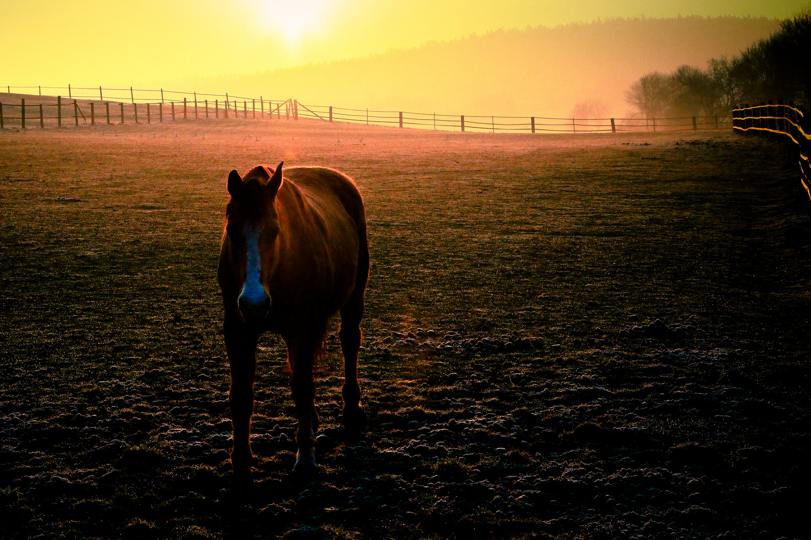 Pferde Morgengeflüster