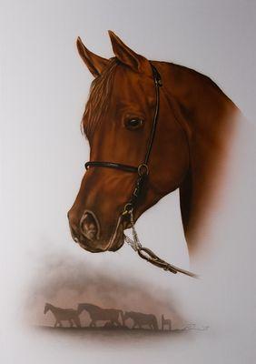 Pferde-Portrait (VA Hengst)