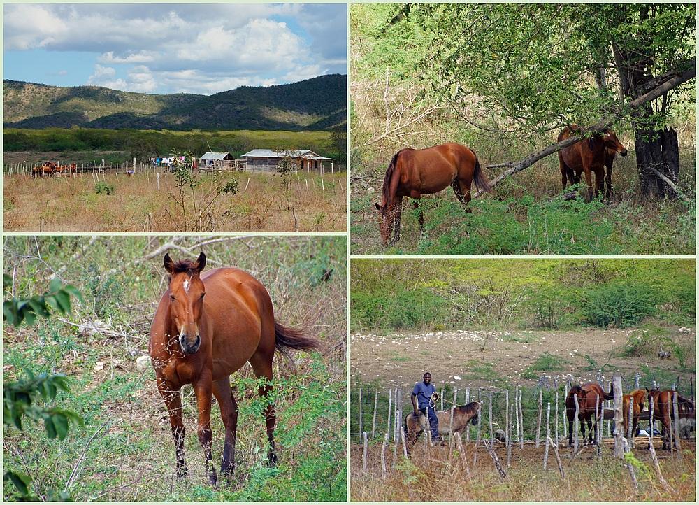 ..Pferde-Ranch..