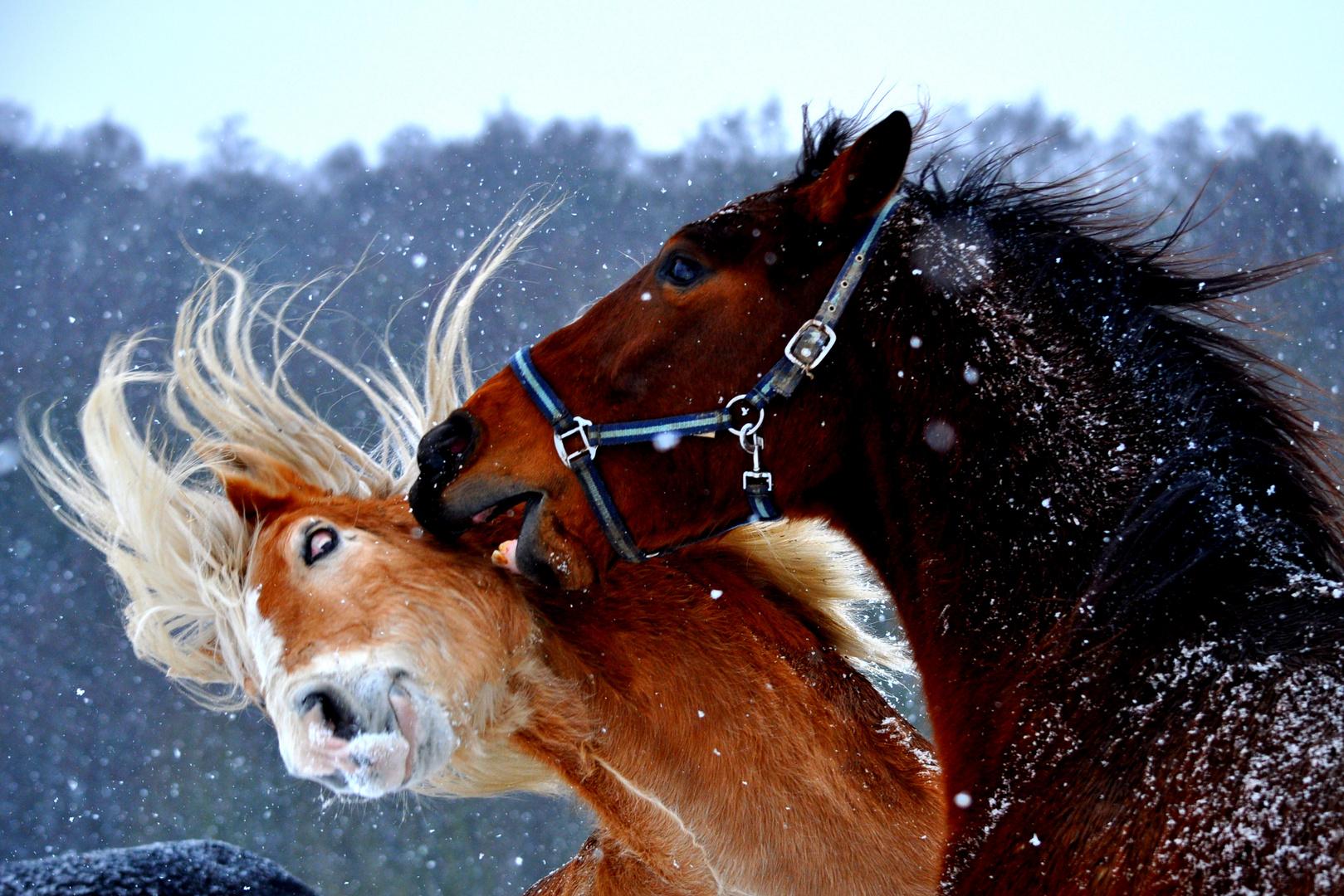 Pferde rangelei