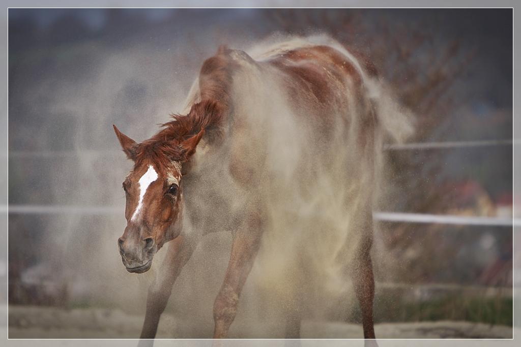 Pferde-Schnitzel!