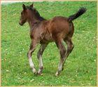 Pferde-Schwänzchen in die Höh'