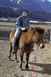 Pferde-Toni