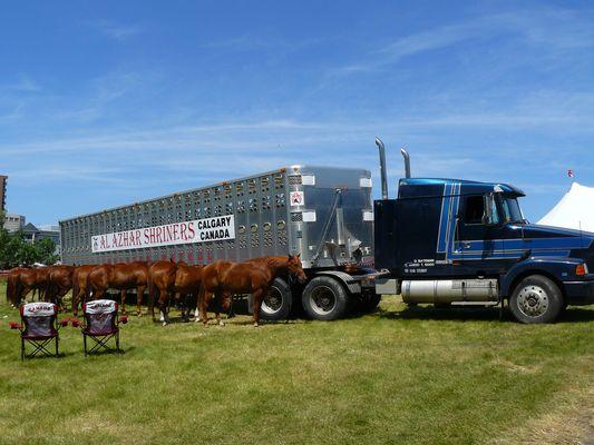 Pferde Transporter Calgary Stampede Alberta