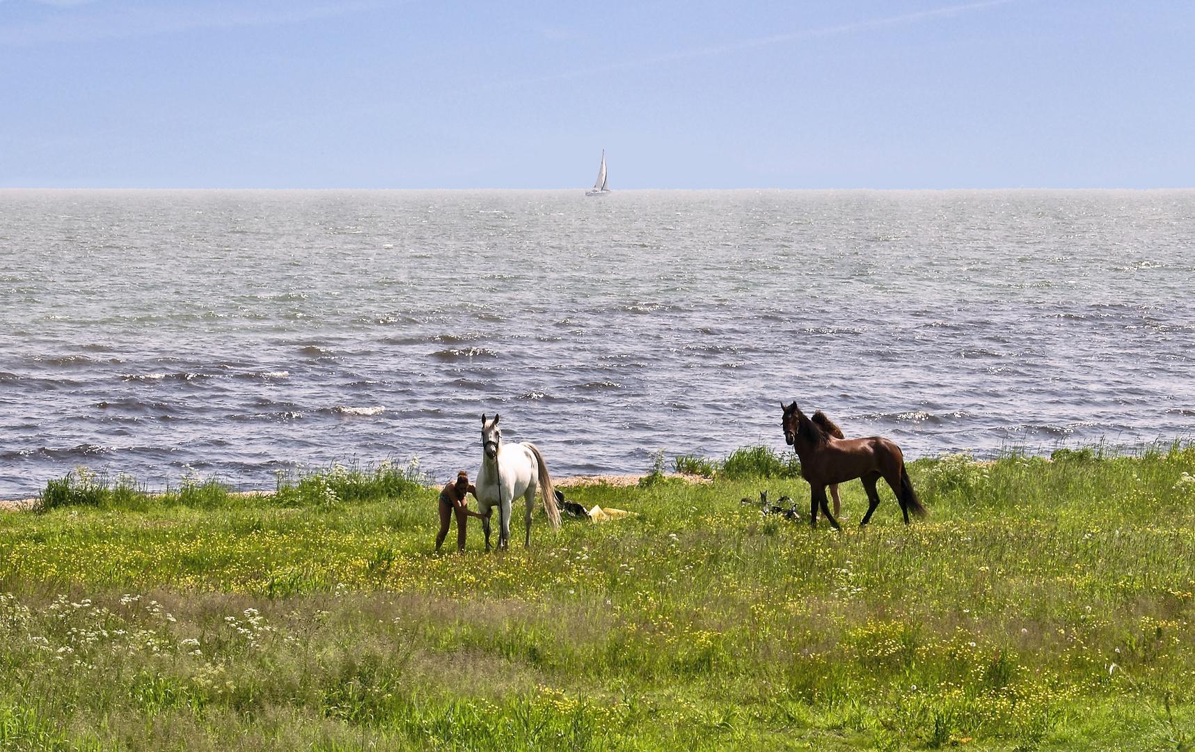 Pferde und Meer