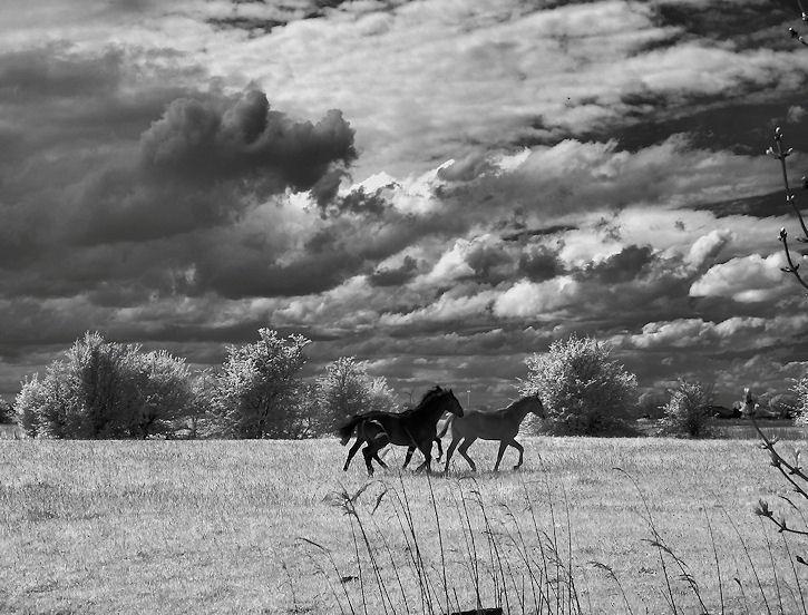 Pferde unter Wolken