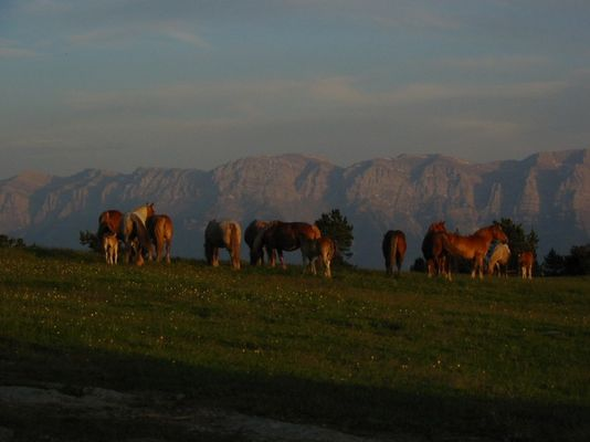 Pferde vor dem Schlafengehen