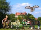 Pferde vor der Hornburg