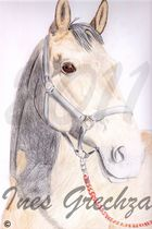 Pferde- Zeichnung in Buntstift