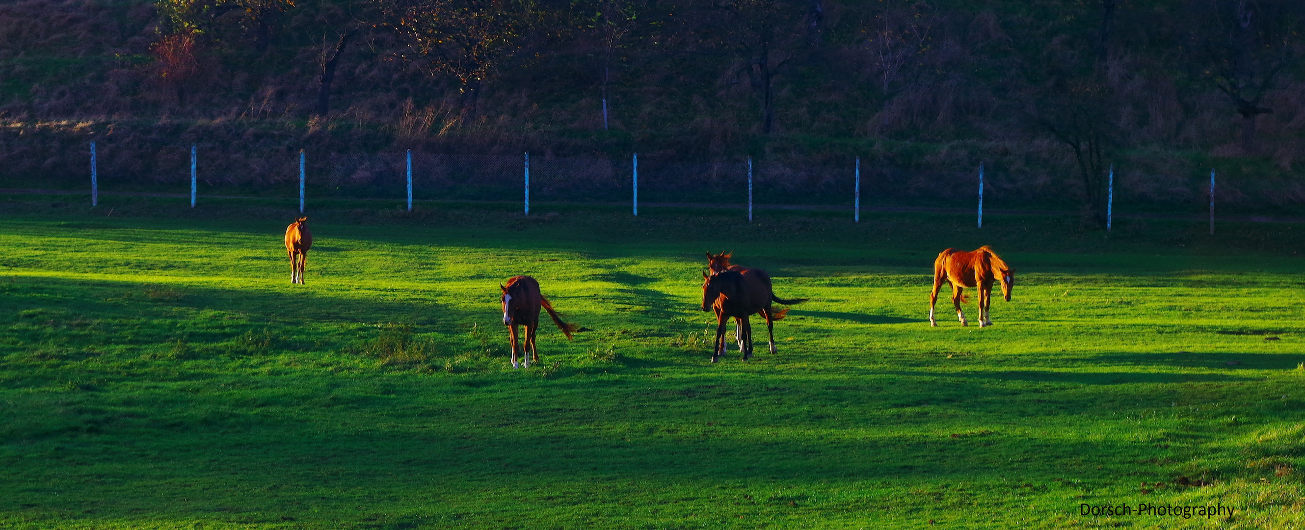 Pferdeauf der Koppel