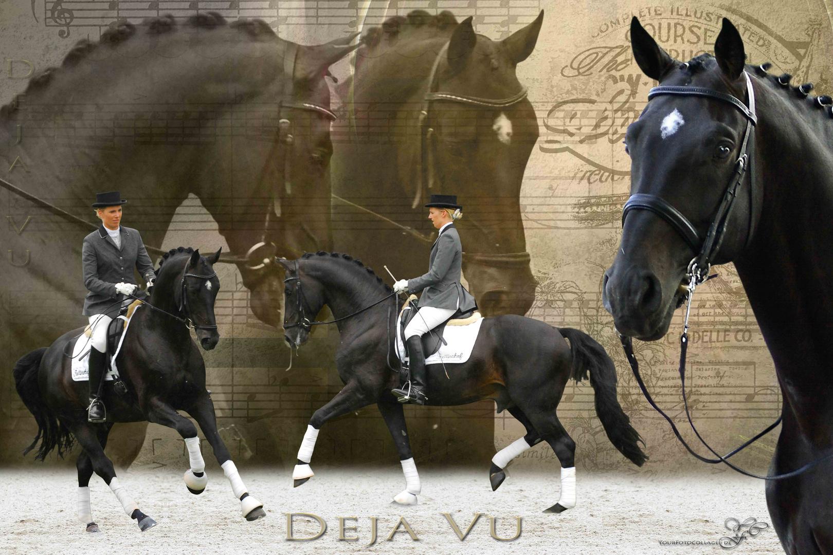 Pferdecollage Deja Vu