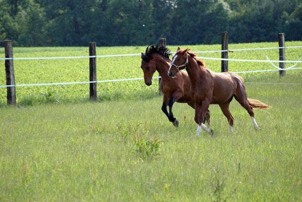 pferdefotos 2