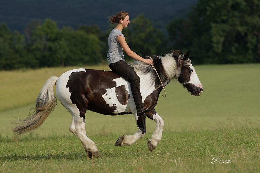 Pferdefreundin