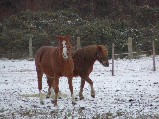 Pferdefreundschaft