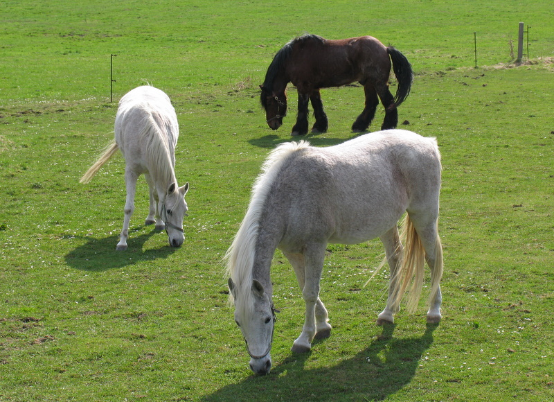 Pferdefrühling