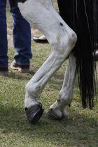 Pferdefuss