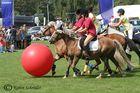 Pferdefußball!