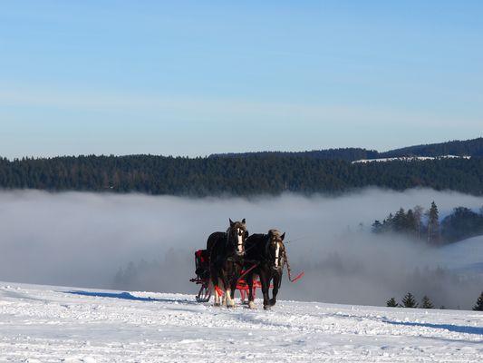 Pferdegespann im Schnee