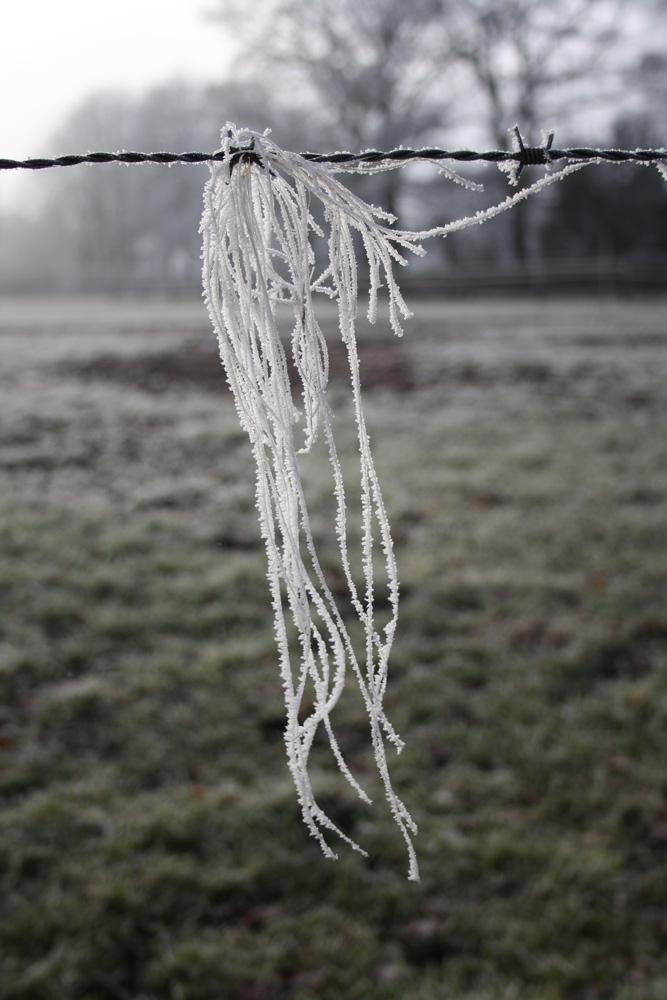 Pferdehaare gefrostet