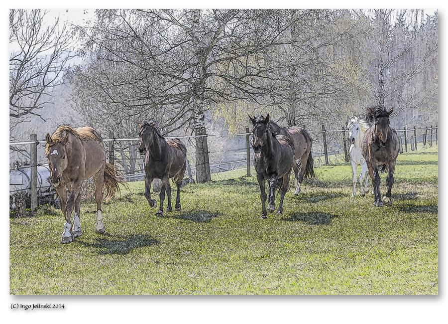 Pferdeherde im Galopp