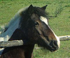 Pferdekopf gemalt