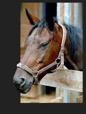 Pferdekopf3