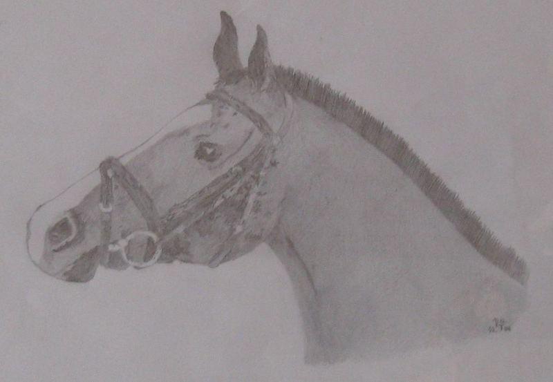 Pferdekopfzeichnung