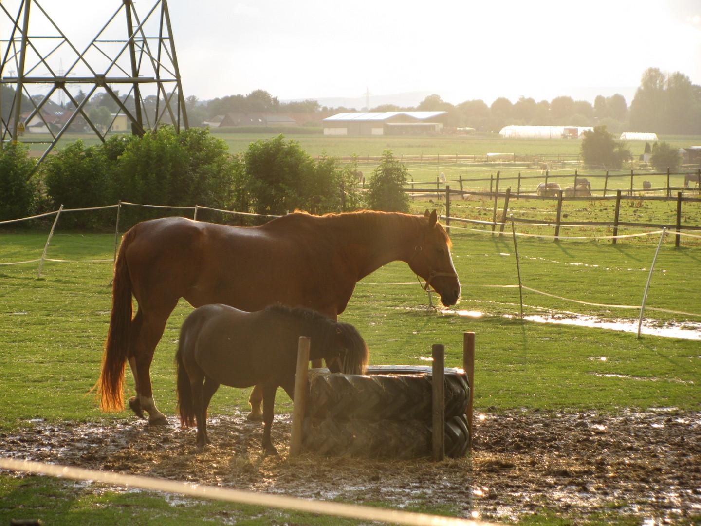 Pferdekoppel auf der anderen Seite des Regenbogens