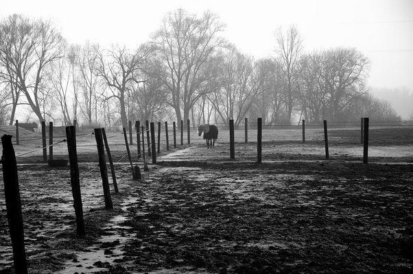 Pferdekoppel bei Knoglersfreude