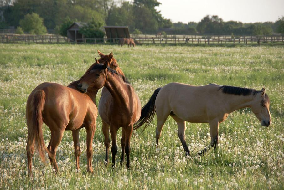 Pferdekoppel bei Seeburg 02