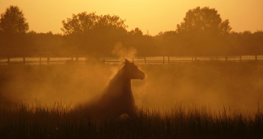 Pferdekoppel bei Seeburg 06