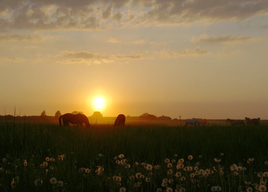 Pferdekoppel bei Seeburg 07