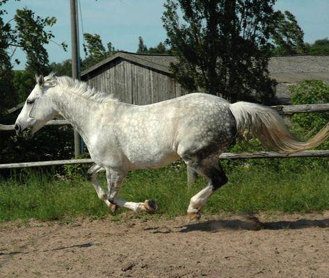 Pferdekoppel in Altleiningen