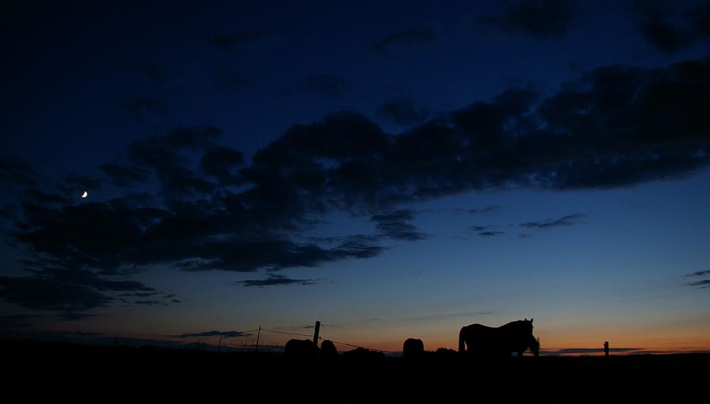 pferdekoppel@night
