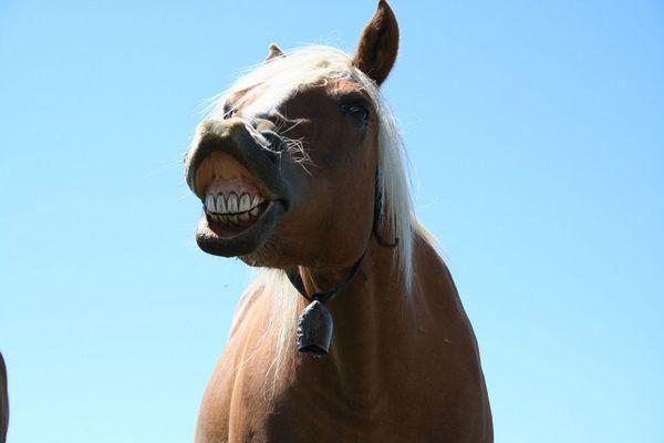 Pferdelächeln?
