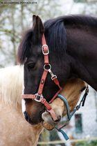 Pferdeliebe :-)