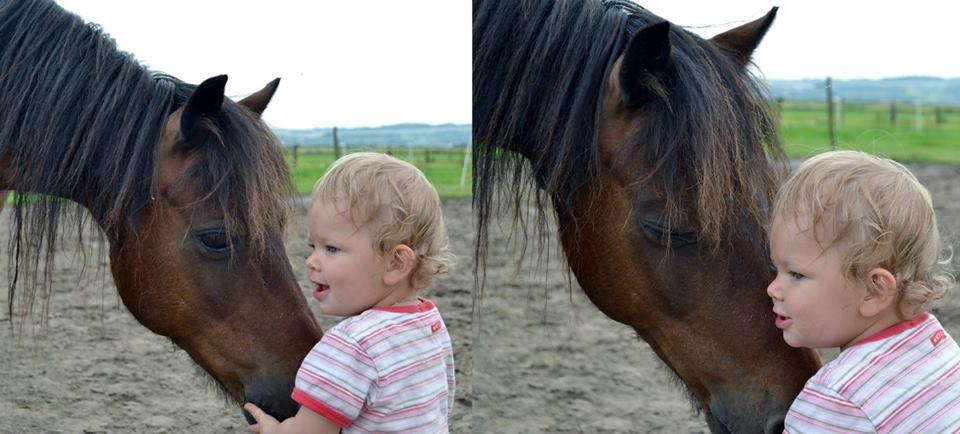 Pferdeliebe ist.....